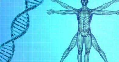 genome humain